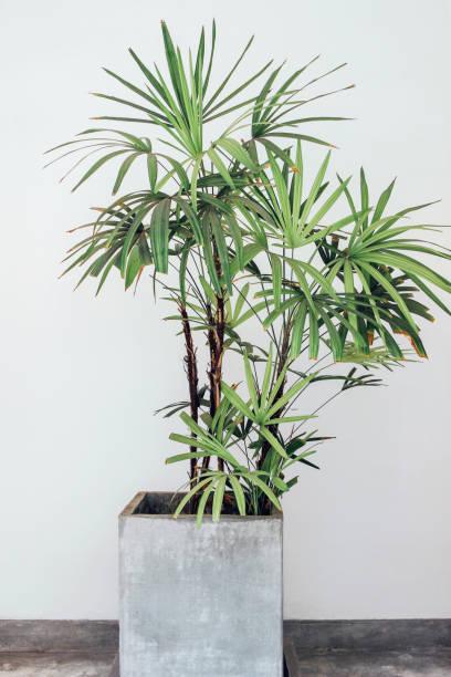 Grüne Palme in Beton – Foto
