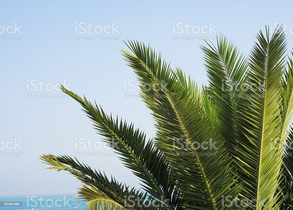 Green palm tree leaves royalty-free stock photo