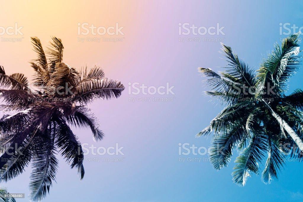 Groene palm Boom silhouet op avondrood achtergrond. Coco palm vintage gestemde foto. foto