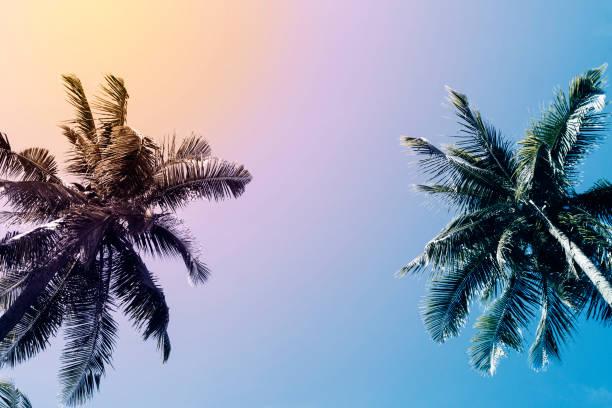 groene palm boom silhouet op avondrood achtergrond. coco palm vintage gestemde foto. - strandfeest stockfoto's en -beelden