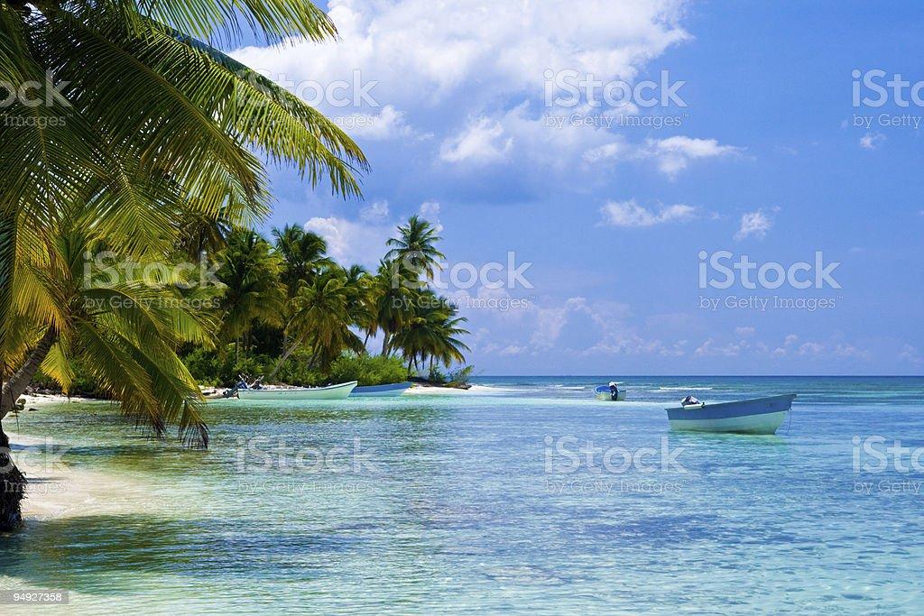 Green palms on a white sand beach stock photo