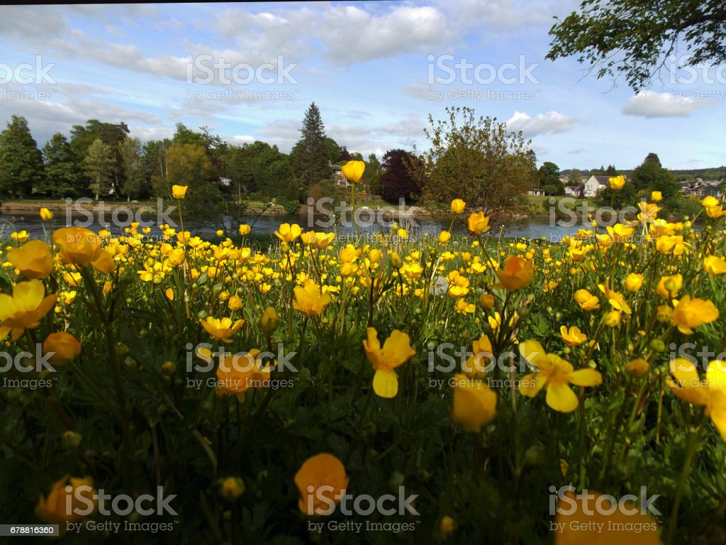 Green park and flowers in bloom photo libre de droits