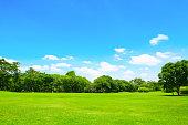 グリーンパークとツリー、ブルースカイ