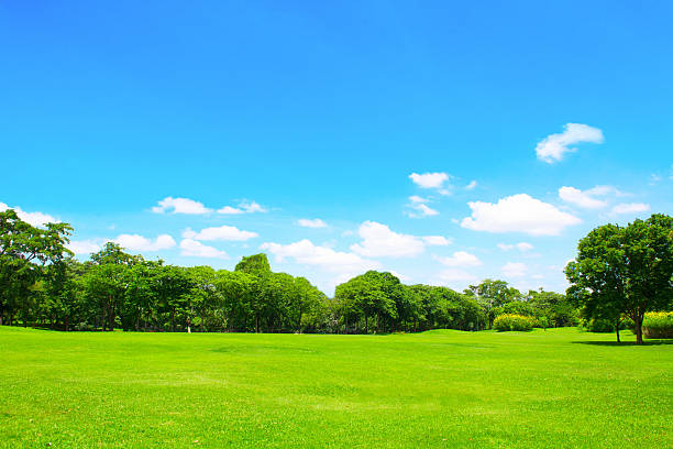 Green park y árbol con cielo azul - foto de stock