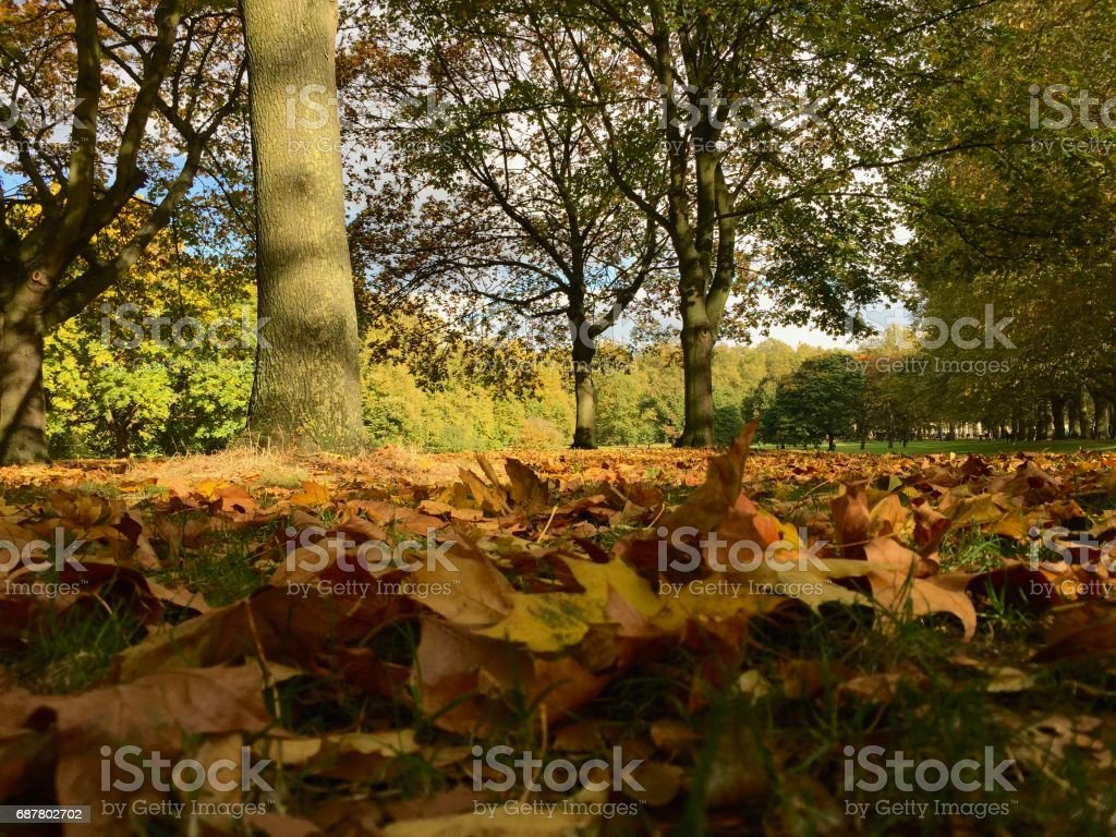 Green Park autumn leaves stock photo