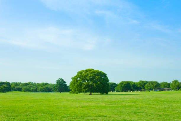green park tree and lawn horizon over land stock pictures, royalty-free photos & images