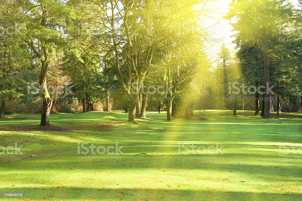 Green park stock photo