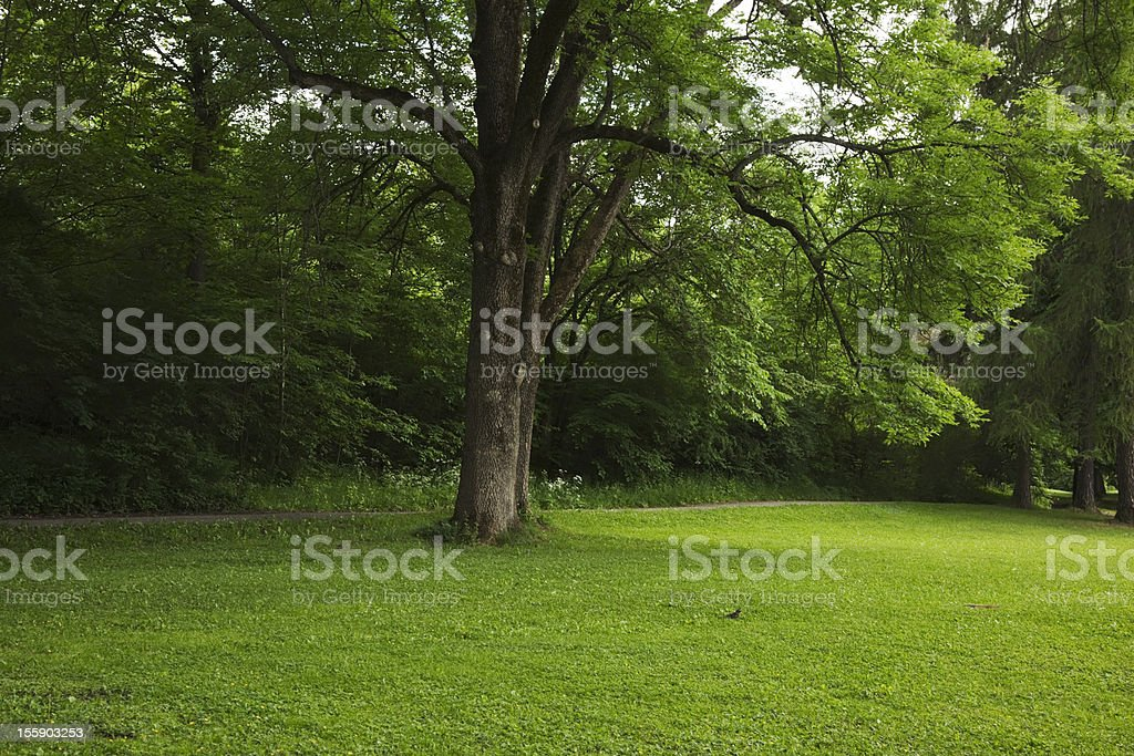 Green park  with large old decideous trees and shaded areas. royalty-free stock photo