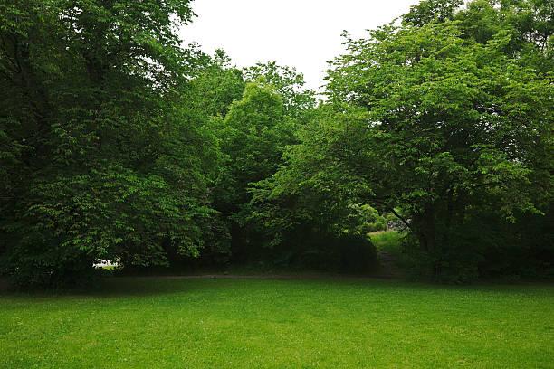 Parque verde con árboles grandes old decideous y las áreas sombradas. - foto de stock