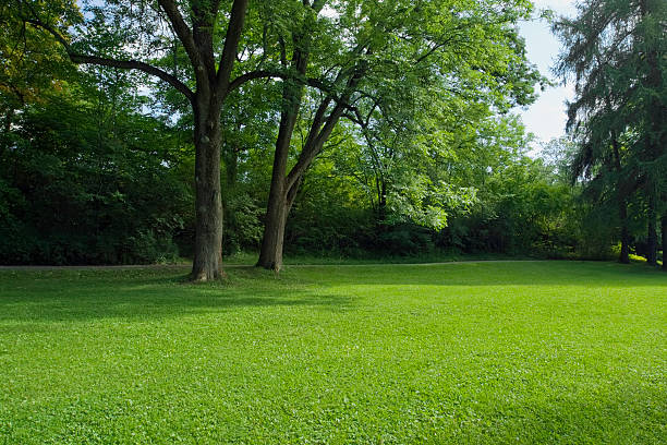 Green park  with large old decideous trees and shaded areas. stock photo