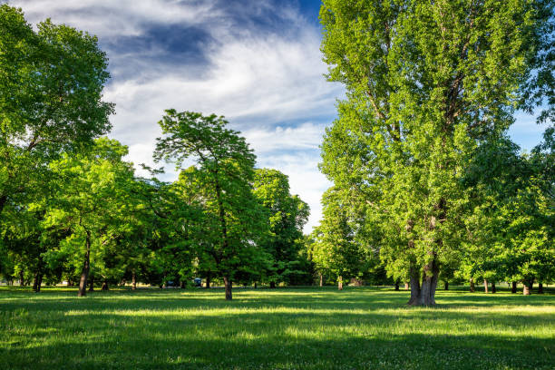 Green park with lawn and trees in a city stock photo