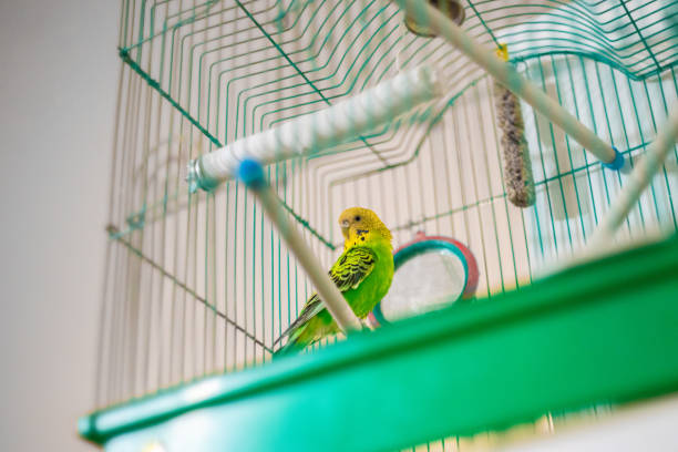 green parrot caged poultry stock photo