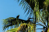 green parrot on a spreading palm tree, wild birds on a tree in the park, fauna
