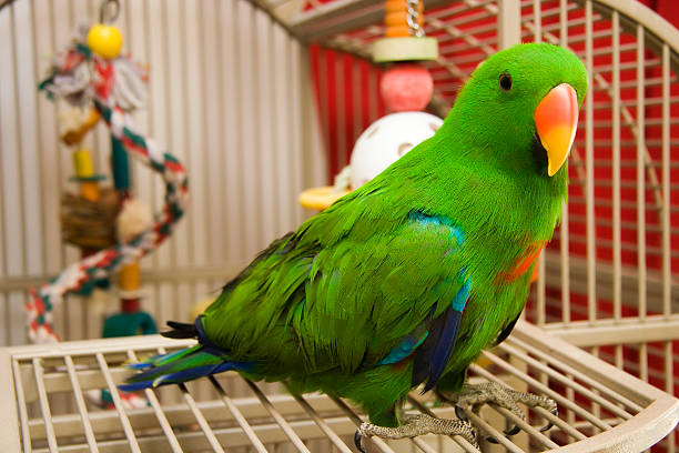 Green parrot perched on the open door of its cage