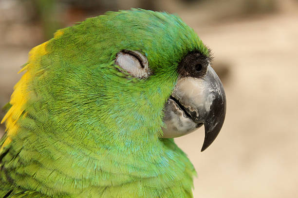 Green parrot stock photo