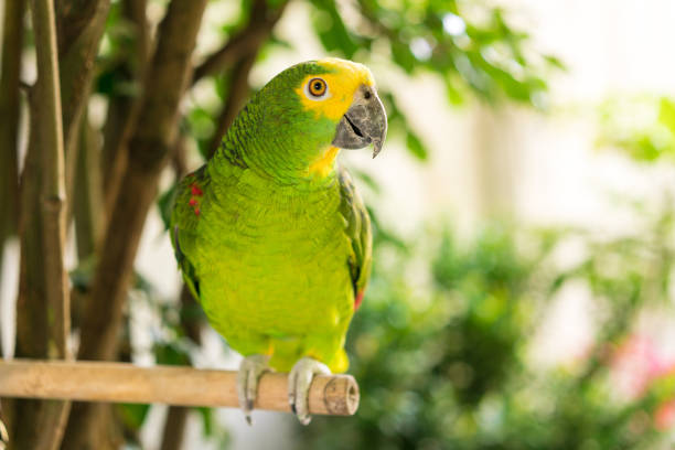 groene papegaai - neerstrijken stockfoto's en -beelden