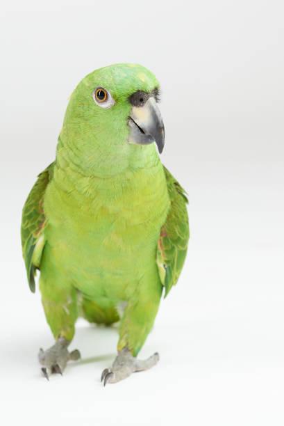 Grüner Papageienspaziergang – Foto