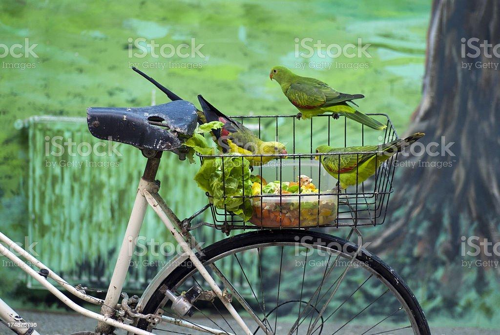 Green Papageien auf einem Fahrrad. – Foto