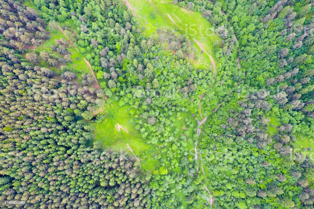 Green pasture and forest tree from above, summer aerial view