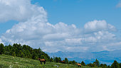green pasture for animals and horses, valley with mountain range on horizon under clouds, rocks in blue fog