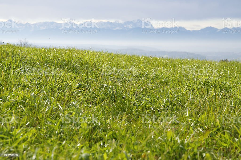 Green Pasture in the Alps stock photo