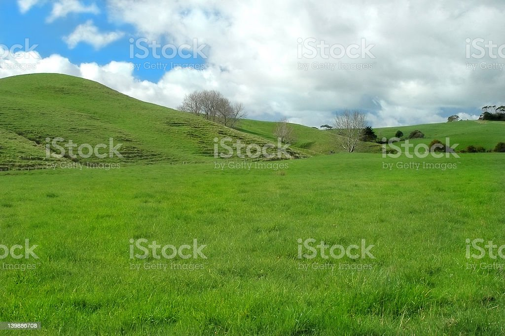Green Pasture royalty-free stock photo