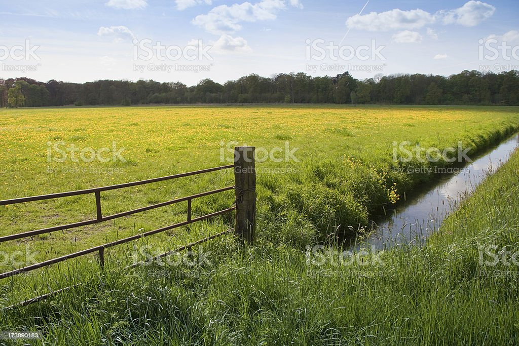 Green pasture with dandelions (XXL) royalty-free stock photo