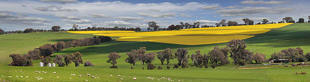 Green pastures and fields of Gold stock photo