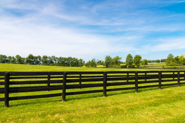 Green pastures of horse farms. Country summer landscape. Green pastures of horse farms. Country summer landscape. ranch stock pictures, royalty-free photos & images