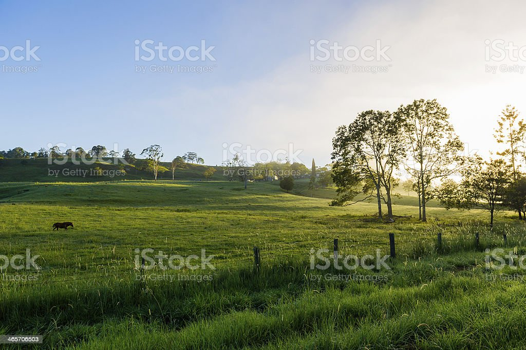 Green Pastures on Farm Northern Rivers NSW stock photo