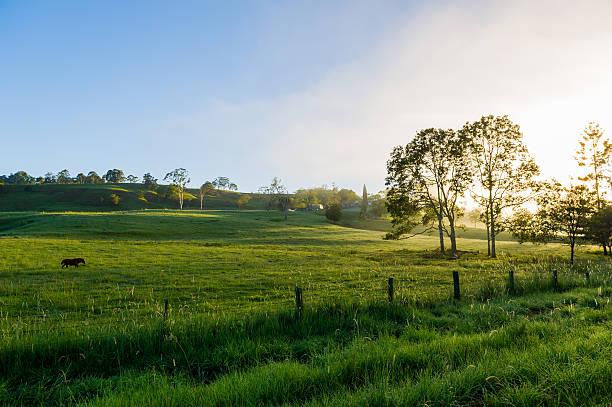 Grüne Wiesen auf der Farm Northern Rivers NSW – Foto