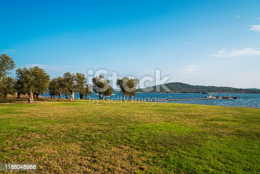 Green pastures overlooking the seaside with boat and olive tree