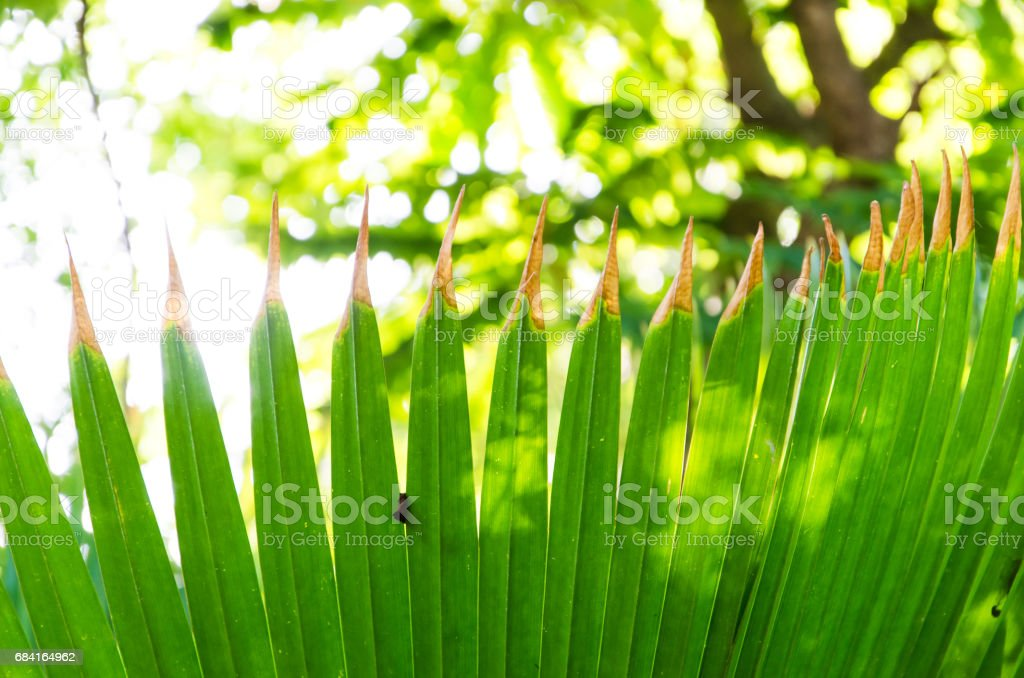 green pattern of palm leaf foto stock royalty-free