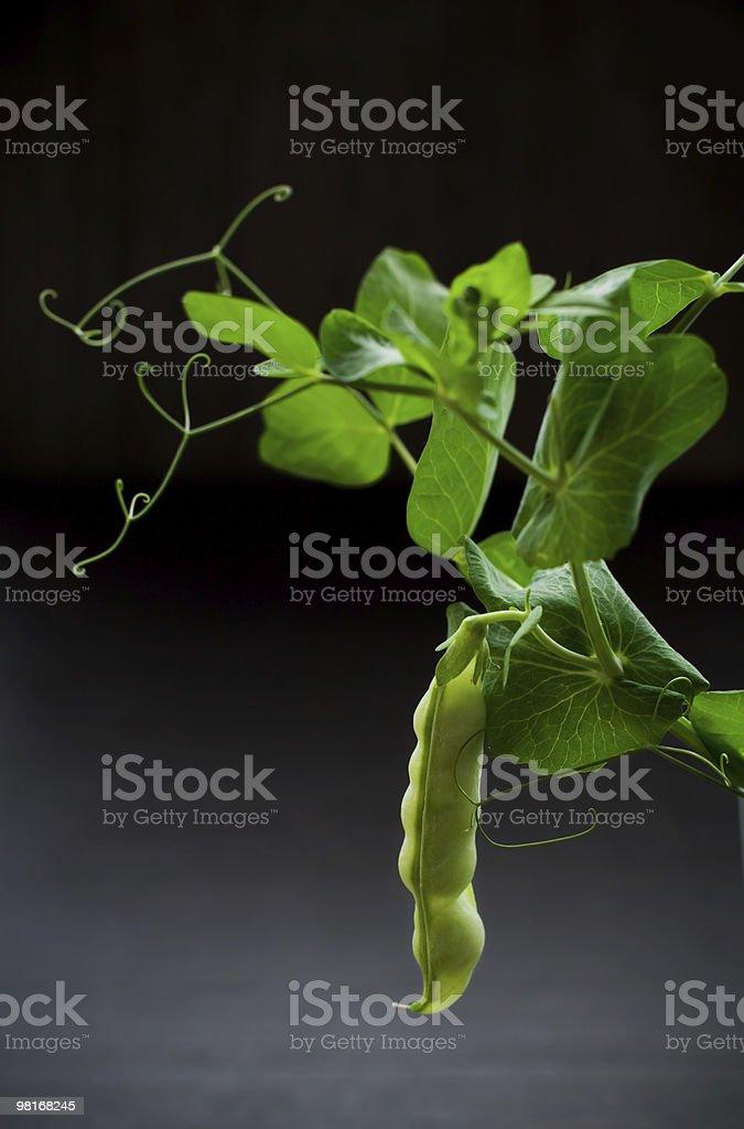 green pea pod royalty-free stock photo