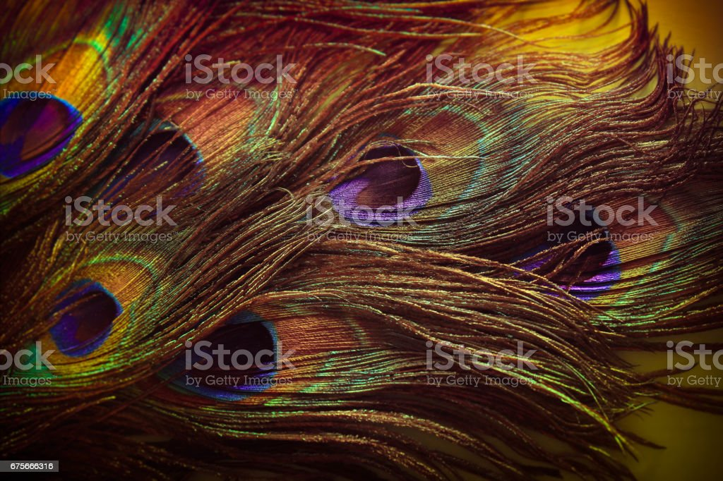 green peacock feathers in vintage style royalty-free stock photo