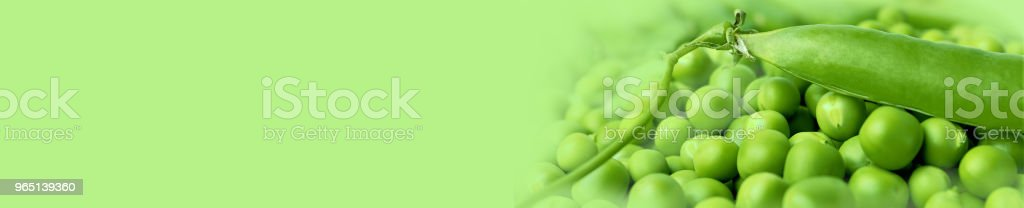 Green peas or peas (Latin Písum) cerebral. Ingredient for cooking, raw food and feed. Close-up. Banner. zbiór zdjęć royalty-free