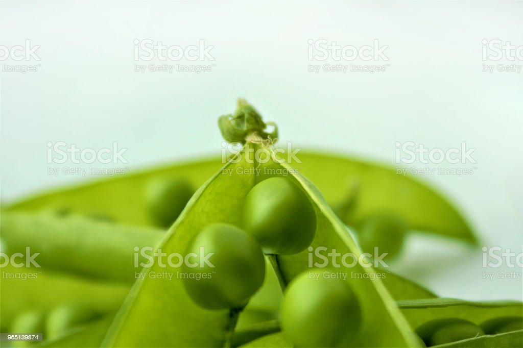 Green peas or peas (Latin Písum) cerebral. Ingredient for cooking, raw food and feed. Close-up. royalty-free stock photo