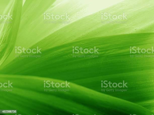 Green petals picture id452388705?b=1&k=6&m=452388705&s=612x612&h=hxmdoc 8fae2gkcw0luywvbf0ysbkuu9yxscrxnz74q=