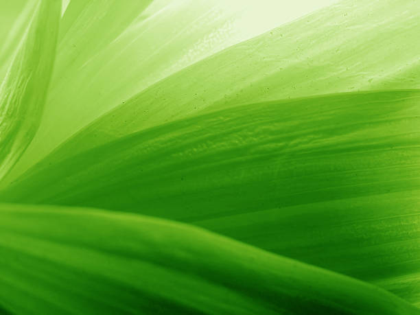 green petals - green background stock photos and pictures