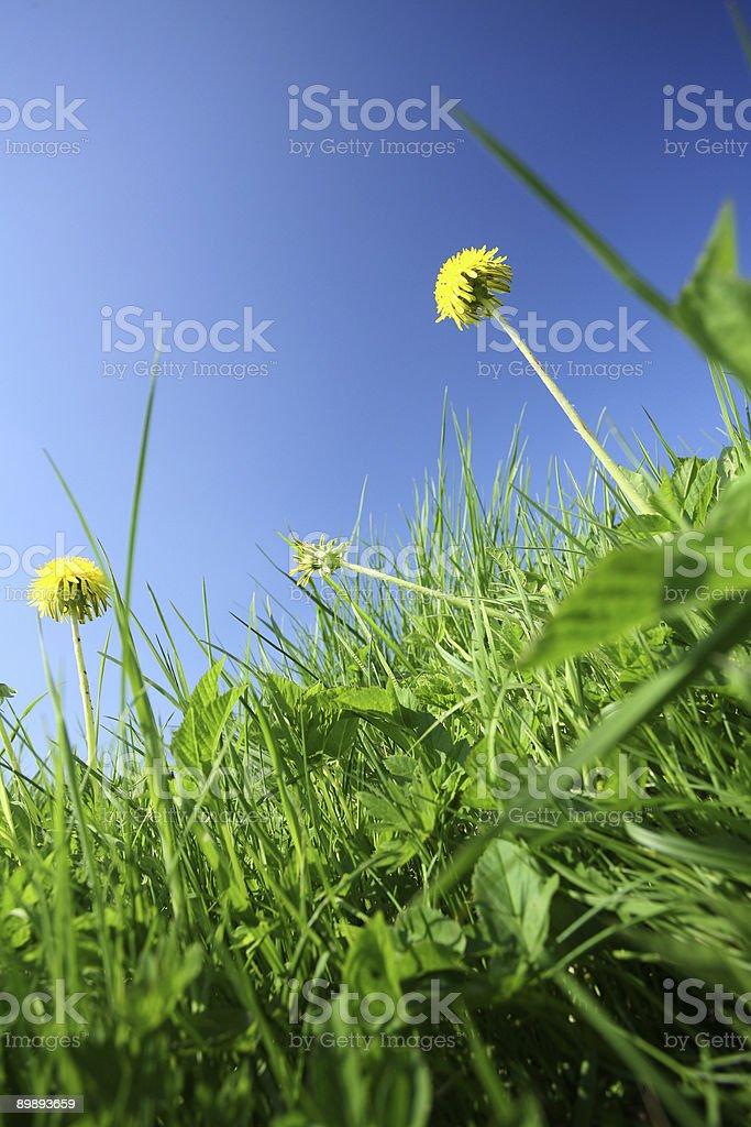 Зеленый Стоковые фото Стоковая фотография