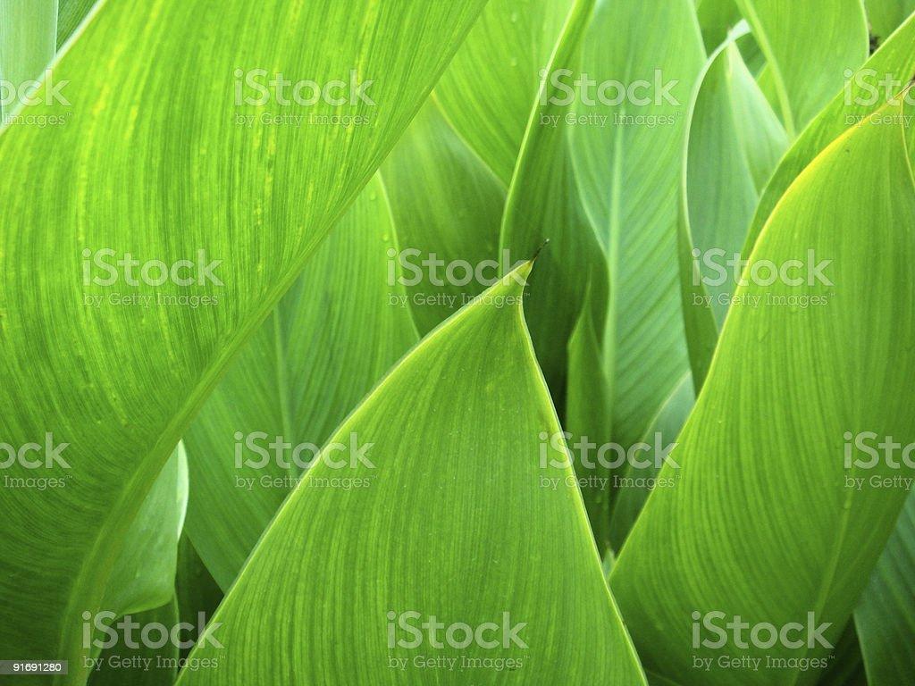 Green royalty-free stock photo