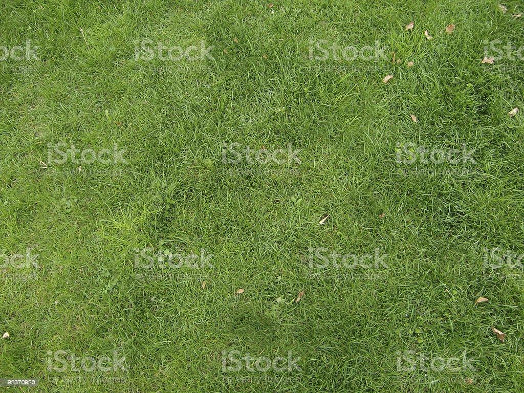 Green Lizenzfreies stock-foto