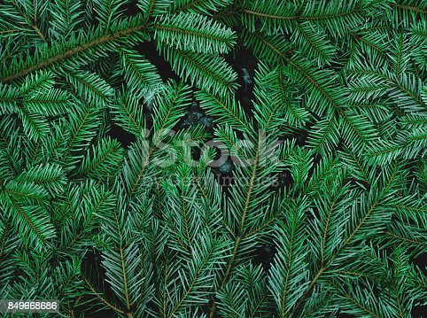 istock Green pine leaves on the ground 849668686