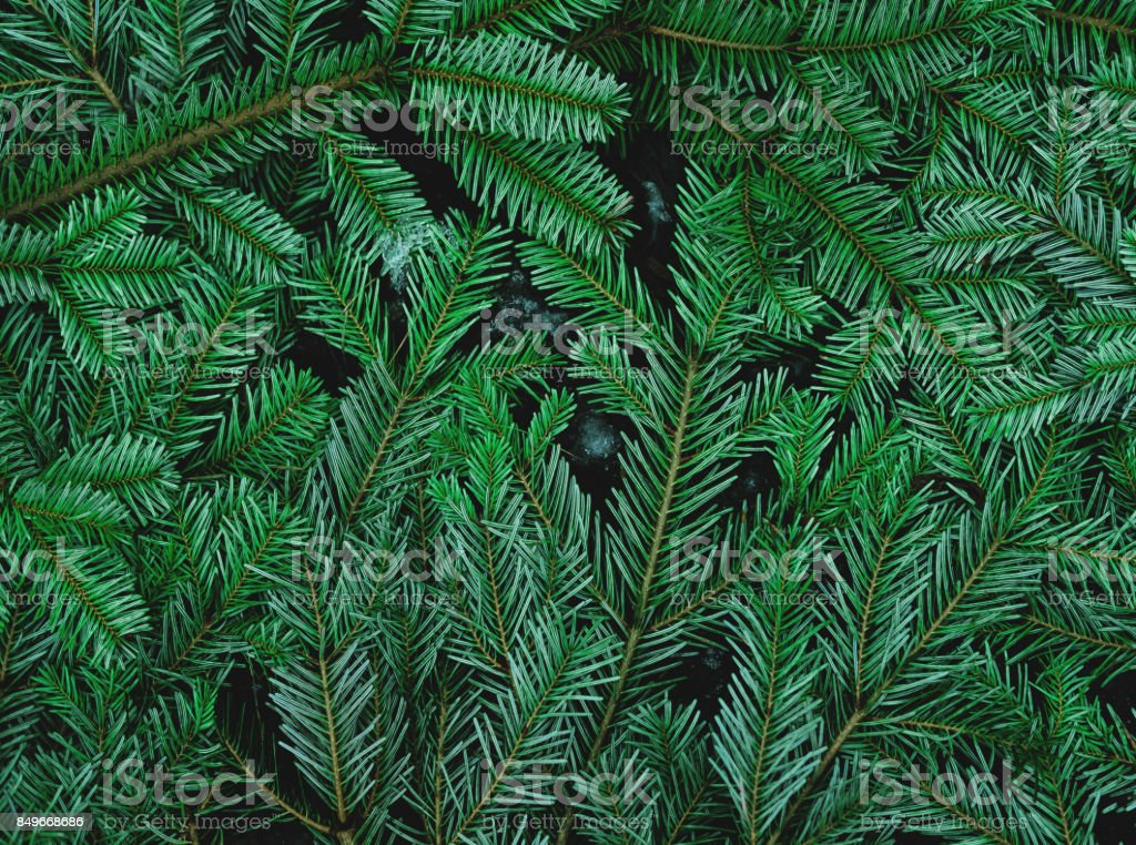 Green pine leaves on the ground stock photo