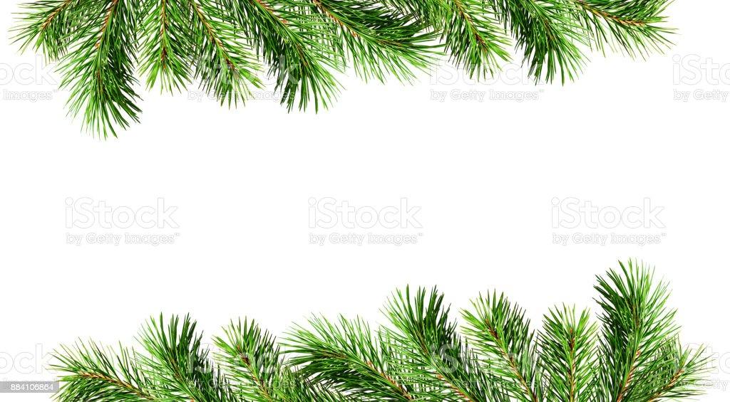 クリスマス枠の緑の松の小枝 お祝いのストックフォトや画像を多数ご