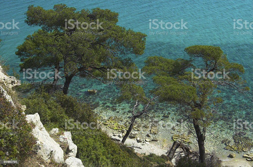 Green pines royalty-free stock photo