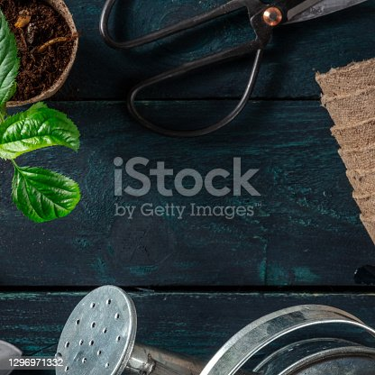 istock Green plant and gardening tools, square frame for a banner or flyer 1296971332