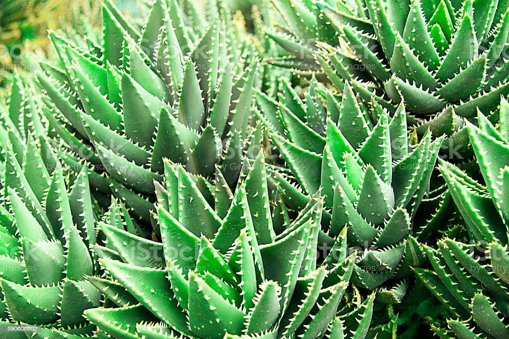 Zielona Roślina tło  – zdjęcie