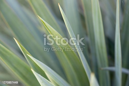 Green plant background. Soft focus
