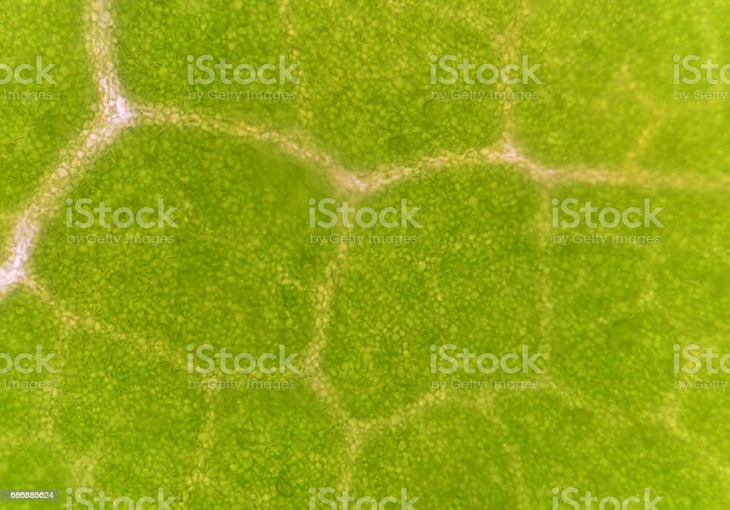 Green plant cells blurred abstract science background. stock photo